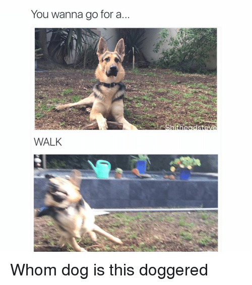 Wanna Go For A Walk: You wanna go for a  WALK Whom dog is this doggered