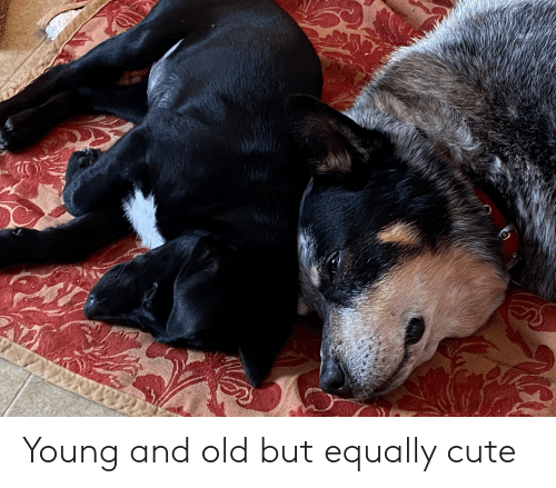 Cute, Old, and Young: Young and old but equally cute