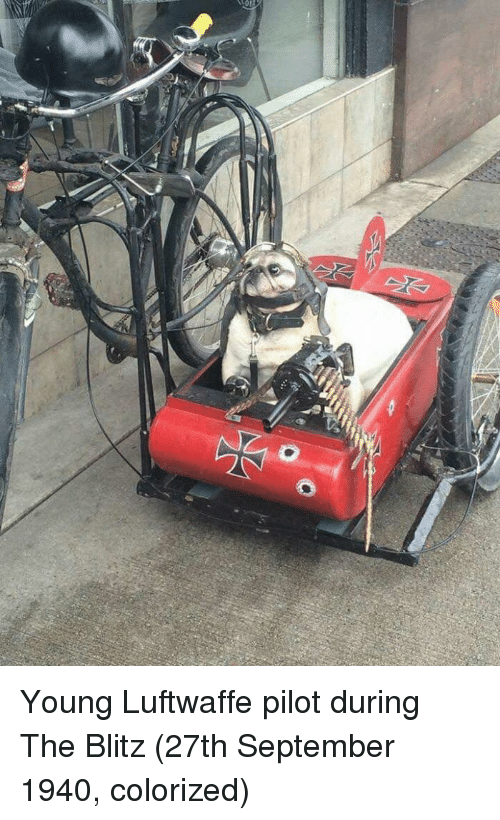 blitz: Young Luftwaffe pilot during The Blitz (27th September 1940, colorized)