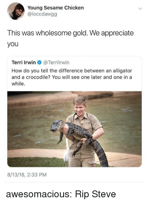 Terri: Young Sesame Chicken  @loccdawgg  This was wholesome gold. We appreciate  you  Terri Irwin @Terr.Irwin  How do you tell the difference between an alligator  and a crocodile? You will see one later and one in a  while.  8/13/18, 2:33 PM awesomacious:  Rip Steve