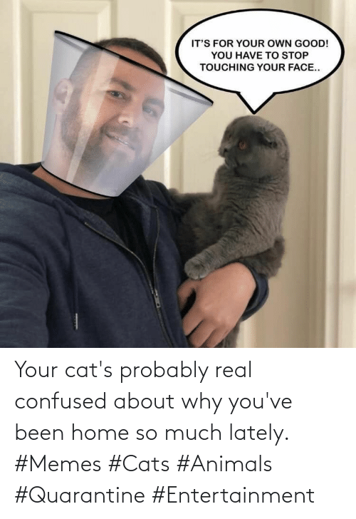 Home: Your cat's probably real confused about why you've been home so much lately. #Memes #Cats #Animals #Quarantine #Entertainment