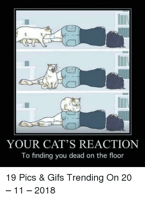 You Dead: YOUR CAT'S REACTION  To finding you dead on the floor 19 Pics & Gifs Trending On 20 – 11 – 2018