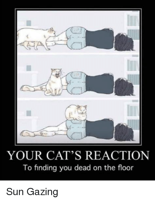 You Dead: YOUR CAT'S REACTION  To finding you dead on the floor Sun Gazing