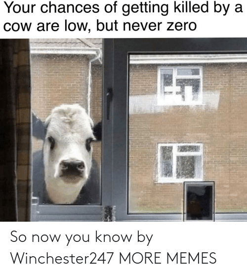 But Never: Your chances of getting killed by a  Cow are low, but never zero So now you know by Winchester247 MORE MEMES