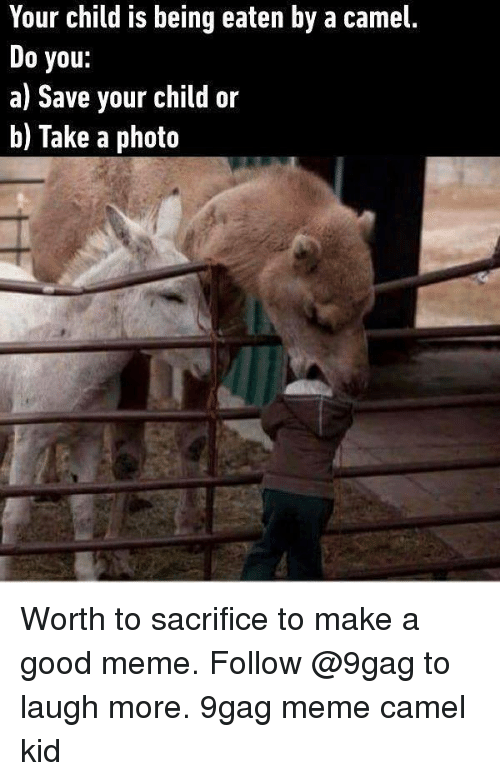 9Gag Meme: Your child is being eaten by a camel.  Do you:  a) Save your child or  b) Take a photo Worth to sacrifice to make a good meme. Follow @9gag to laugh more. 9gag meme camel kid