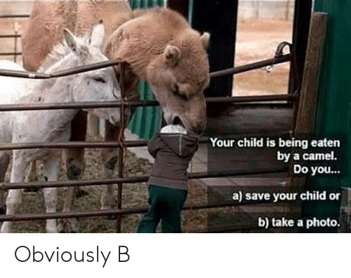 camel: Your child is being eaten  by a camel.  Do you...  a) save your child or  b) take a photo. Obviously B