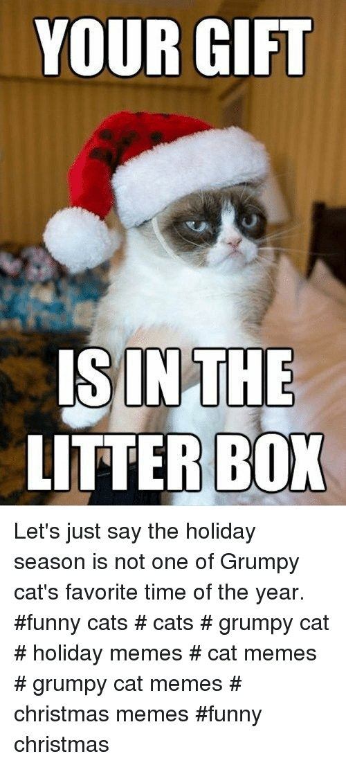 Holiday Season: YOUR GIFT  ISINTHE  LITTER BOX Let's just say the holiday season is not one of Grumpy cat's favorite time of the year. #funny cats # cats # grumpy cat # holiday memes # cat memes # grumpy cat memes # christmas memes #funny christmas