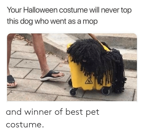 mop: Your Halloween costume will never top  this dog who went as a mop and winner of best pet costume.