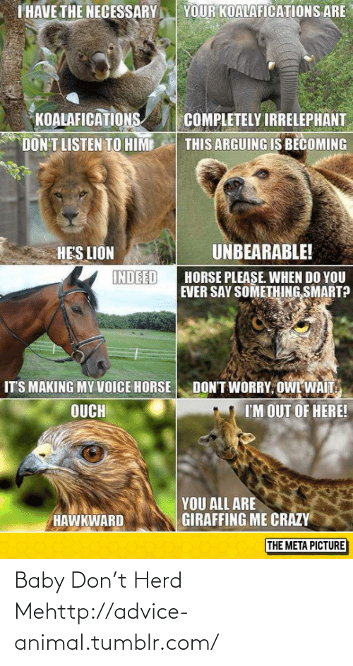 The Necessary: YOUR KOALAFICATIONS ARE  I HAVE THE NECESSARY  KOALAFICATIONS  DON'T LISTEN TO HIM  COMPLETELY IRRELEPHANT  THIS ARGUING IS BECOMING  UNBEARABLE!  HE'S LION  INDEED  HORSE PLEASE. WHEN DO YOU  EVER SAY SOMETHING SMART?  DON'T WORRY, OWL WAIT.  IT'S MAKING MY VOICE HORSE  I'M OUT OF HERE!  OUCH  YOU ALL ARE  GIRAFFING ME CRAZY  HAWKWARD  THE META PICTURE Baby Don't Herd Mehttp://advice-animal.tumblr.com/