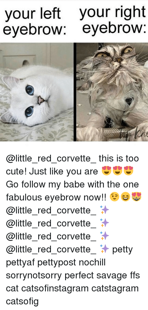 fabulousness: your left your right  eyebrow  eyebrow @little_red_corvette_ this is too cute! Just like you are 😍😍😍 Go follow my babe with the one fabulous eyebrow now!! 😉😆😻 @little_red_corvette_ ✨ @little_red_corvette_ ✨ @little_red_corvette_ ✨ @little_red_corvette_ ✨ petty pettyaf pettypost nochill sorrynotsorry perfect savage ffs cat catsofinstagram catstagram catsofig