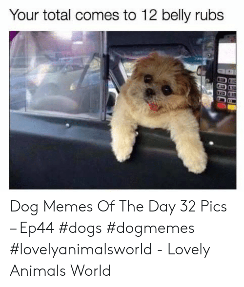 Rubs: Your total comes to 12 belly rubs Dog Memes Of The Day 32 Pics – Ep44 #dogs #dogmemes #lovelyanimalsworld - Lovely Animals World