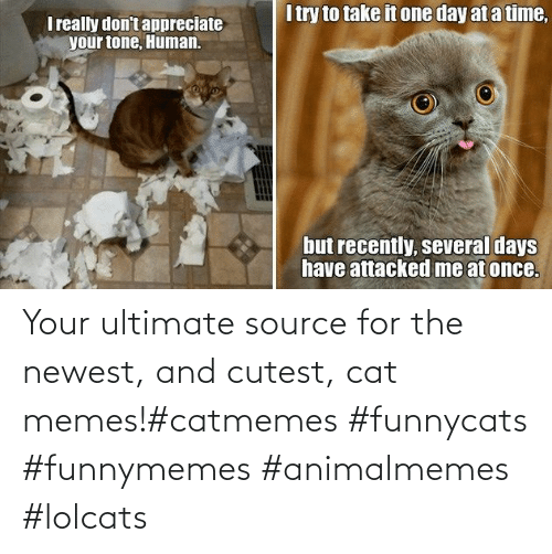 Ultimate: Your ultimate source for the newest, and cutest, cat memes!#catmemes #funnycats #funnymemes #animalmemes #lolcats