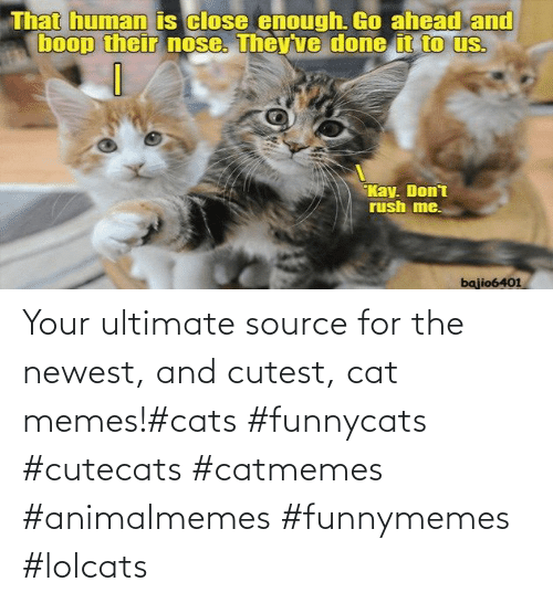Cats: Your ultimate source for the newest, and cutest, cat memes!#cats #funnycats #cutecats #catmemes #animalmemes #funnymemes #lolcats