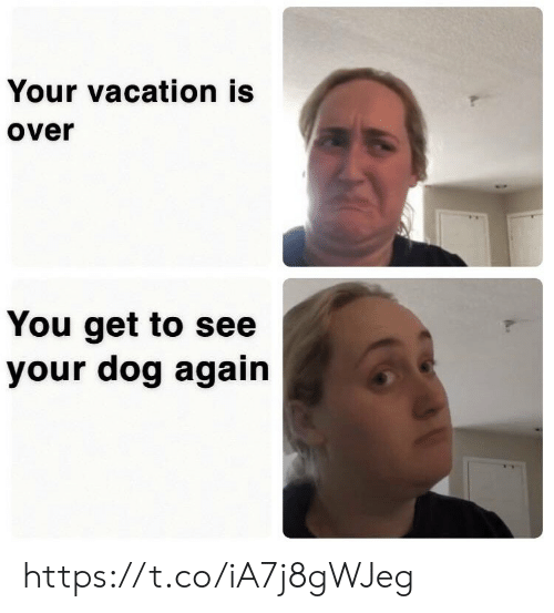 Memes, Vacation, and 🤖: Your vacation is  over  You get to see  your dog again https://t.co/iA7j8gWJeg