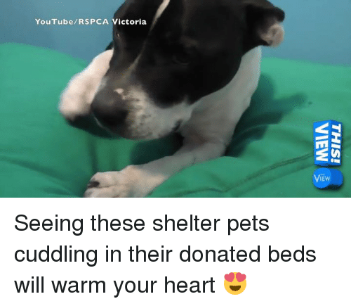 Memes, Pets, and Heart: YouTube/RSPCA Victoria Seeing these shelter pets cuddling in their donated beds will warm your heart 😍