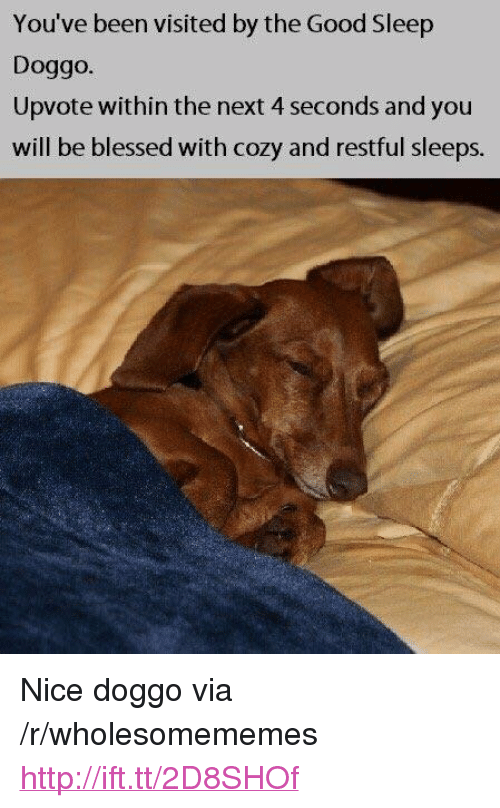 """restful: You've been visited by the Good Sleep  Doggo.  Upvote within the next 4 seconds and you  will be blessed with cozy and restful sleeps. <p>Nice doggo via /r/wholesomememes <a href=""""http://ift.tt/2D8SHOf"""">http://ift.tt/2D8SHOf</a></p>"""