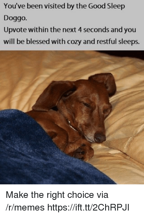 Blessed, Memes, and Good: You've been visited by the Good Sleep  Doggo.  Upvote within the next 4 seconds and you  will be blessed with cozy and restful sleeps. Make the right choice via /r/memes https://ift.tt/2ChRPJI