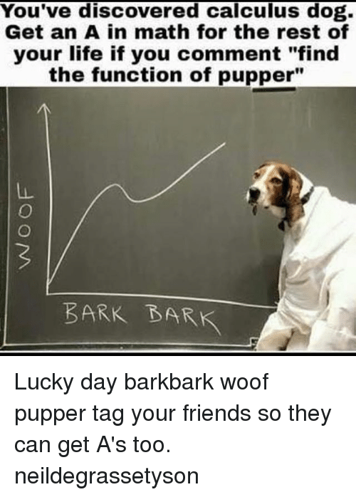 """Woofe: You've discovered calculus dog.  Get an A in math for the rest of  your life if you comment """"find  the function of pupper""""  BARK BARK Lucky day barkbark woof pupper tag your friends so they can get A's too. neildegrassetyson"""