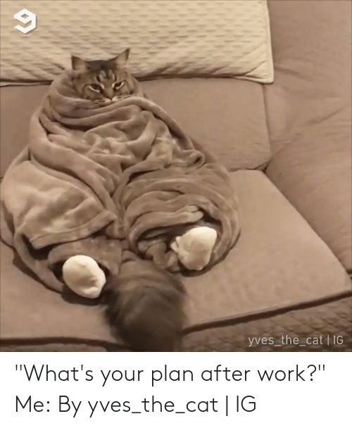"""Dank, Work, and 🤖: yves the cat I IG """"What's your plan after work?"""" Me:  By yves_the_cat 