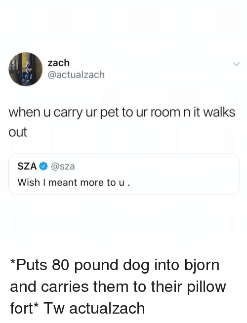 Memes, 🤖, and Dog: zach  @actualzach  when u carry ur pet to ur room n it walks  out  SZA @sza  Wish I meant more to u *Puts 80 pound dog into bjorn and carries them to their pillow fort* Tw actualzach