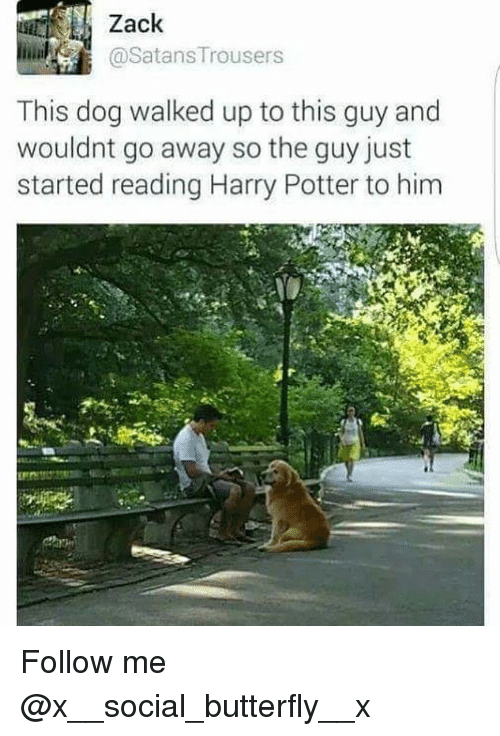 Harry Potter, Memes, and Butterfly: Zack  This dog walked up to this guy and  wouldnt go away so the guy just  started reading Harry Potter to him Follow me @x__social_butterfly__x