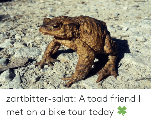 Tumblr, Blog, and Today: zartbitter-salat:  A toad friend I met on a bike tour today  🍀