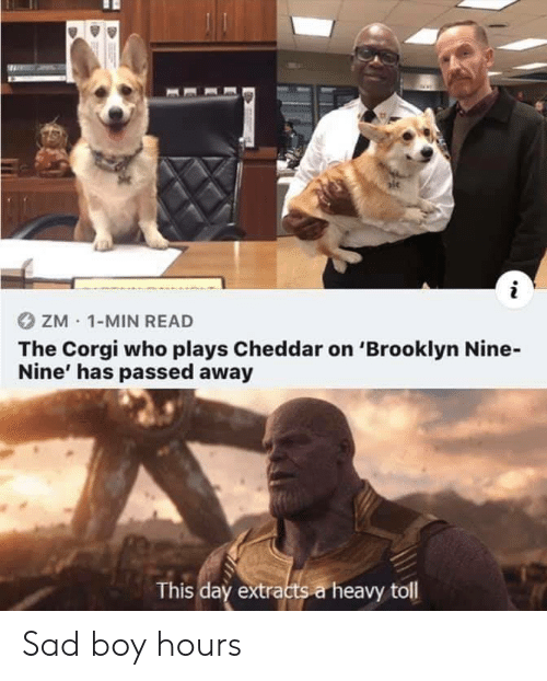 Nine Nine: ZM 1-MIN READ  The Corgi who plays Cheddar on 'Brooklyn Nine-  Nine' has passed away  This day extracts a heavy toll Sad boy hours