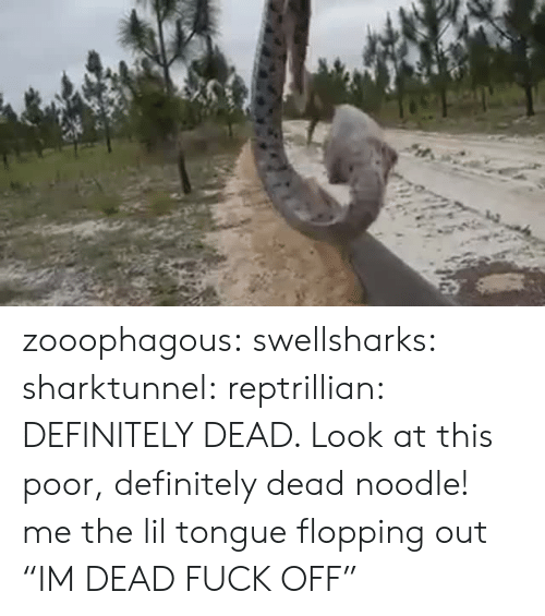 """Definitely, Target, and Tumblr: zooophagous: swellsharks:  sharktunnel:  reptrillian:  DEFINITELY DEAD. Look at this poor, definitely dead noodle!  me  the lil tongue flopping out   """"IM DEAD FUCK OFF"""""""